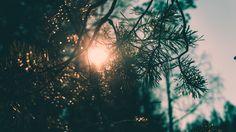 Sunlight through branch (6000x3376)