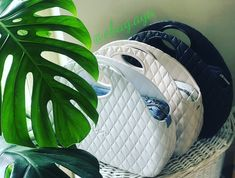 O Bag, Aga, Plant Leaves, Photo And Video, Instagram