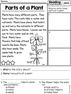 Plants {Science, Math, & Literacy Unit Plan for K and 3rd Grade Reading Comprehension Worksheets, 2nd Grade Worksheets, Reading Comprehension Passages, Science Worksheets, Reading Worksheets, Teaching Science, Teaching Reading, Learning, First Grade Science