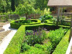 shrubs, hedges | Broadleaf Evergreen Shrubs | Evergreen Shrubs