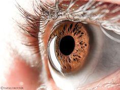 Eye... by tafali mounir on 500px