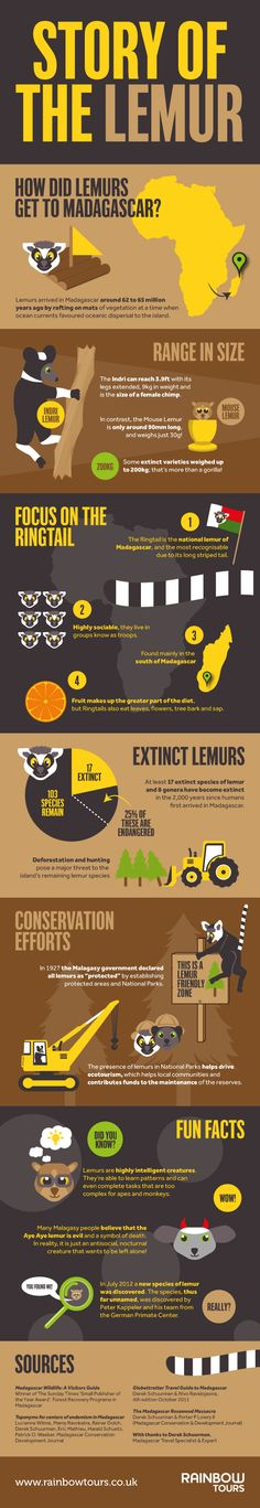 Story of the Lemur, infographic. Madagascar, Africa. Travel to Madagascar with ISLAND CONTINENT TOURS DMC. A member of GONDWANA DMC, your network of boutique Destination Management Companies for travel across the globe - www.gondwana-dmcs.net