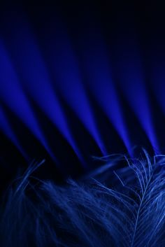 blue lines (by dedalus11)