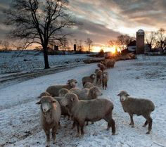 Alright, the picture is promo for knitting but the combo of sunset and sheep made it universal
