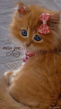 Google+kitty cute