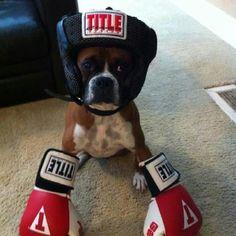 Boxer the Boxer!!