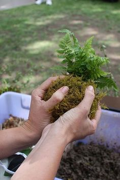 How to kokedama - Moss Ball, can grow plants from it, in a dish or hang it up...