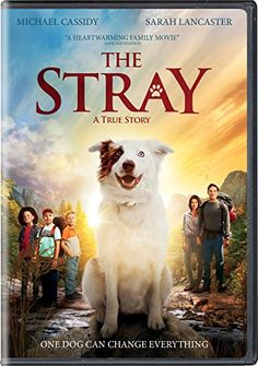 The Stray 2017 Sinhala Sub Les Synopsis A Young Father Takes His Nine Year Old Son The Family Dog And Two Of His Sons Friends Backpacking In The