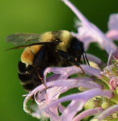 3 Easy Ways to Provide Bumble Bee Nesting Sites – Shannon Trimboli Bumble Bee Nest, Bee Nursery, Wildlife Biologist, Terracotta Flower Pots, Different Plants, Wildlife Conservation, Busy Bee, Bee Keeping, Farm Life