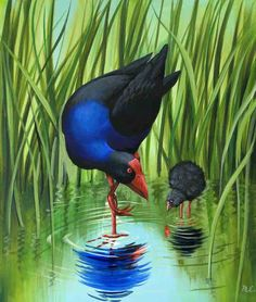"""Painting by Monique Endt """"Pukeko and Baby"""" Acrylic on canvas, birds, New Zealand Artist / Art Artist Painting, Artist Art, Artist At Work, Maori Designs, New Zealand Art, Nz Art, Bird Paintings, Kiwiana, Mural Ideas"""