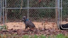 Local animal activists angry over alleged puppy mill in Missouri