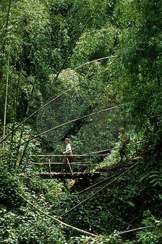 Kibira National Park Burundi #Africa  @michaelOXOXO @JonXOXOXO @emmaruthXOXO  #MAGICALBURUNDI