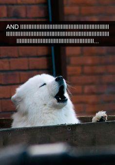 Funny Snapchats Dog Photo – 190 Pics #funnydogpictures