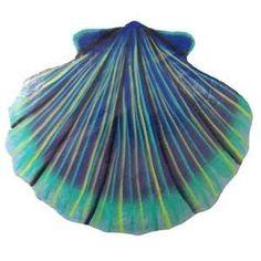ღღ such beautiful colors! Seashell Painting, Seashell Art, Seashell Crafts, Beach Crafts, Starfish, Seashell Chandelier, Carapace, Painted Shells, Scallop Shells