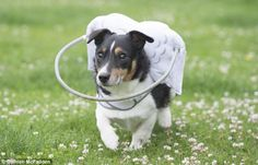 Basil, a four-year-old Collie cross, was found abandoned and blind six months ago but is n...
