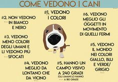 Come vedono i cani Pet Dogs, Dogs And Puppies, Dog Cat, Dog Friends, Best Friends, Terra Nova, Dog Health Tips, Childhood Games, Dog Memes