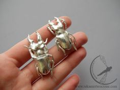 Stag beetle cufflinks Custom-made silver cufflinks, based on real beetles (Lucanus Sinhoei) hand-preserved in silver. Those beetles where especially imported from Taiwan. They are really small about 4,5x2,3cm. #stag_beetle #insect_jewelry #silver_insect #man_jewelry