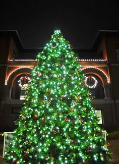 green tree and christmas lights