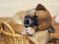 i need a bigger basket...