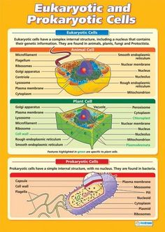 Eukaryotic and Prokaryotic Cells | Science Educational School Posters: