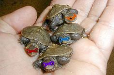 Teenage Mutant Ninja Turtles....I WANT THEM THEY ARE SOOO CUTE!!!