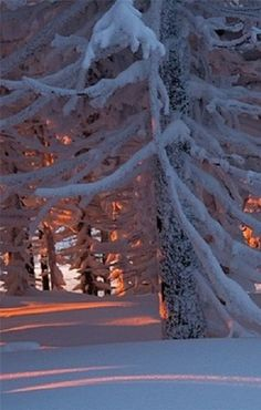 Beautiful forest in the winter snow.