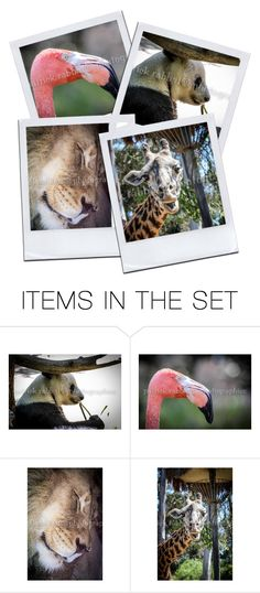 Animal Photography by snugwinterhugs on Polyvore featuring art, integrityTT and TintegrityT