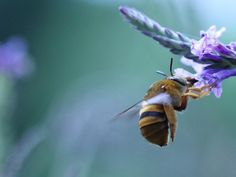 Bees Deserve Respect! Inside the Unsustainable World of Commercial Beekeeping