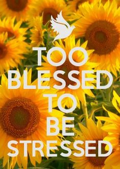 sunflowers & peace images - Google Search