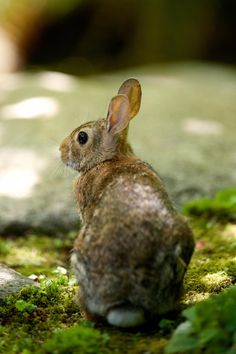 Or is it a hare? Fine, I guess it's a hare then. Close enough. I'm putting it on my Rabbit board anyway. Wild Rabbit, Pet Rabbit, Wild Bunny, Beautiful Creatures, Animals Beautiful, Cute Animals, Beagle, Woodlands Cottage, Dappled Light