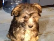 1st Day home with her new MOMMY 1st Day, Beautiful Dogs, Chinese, Animals, Cute Dogs, Animales, Animaux, Animal, Animais