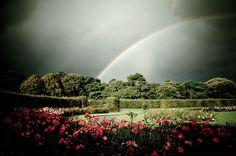 rainbow in a lovely garden