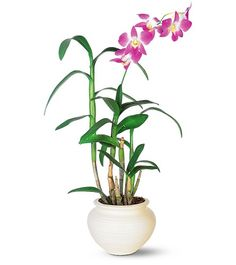 Probably not the best way to pot a Dendrobium. Would be best to hang it in a well drained pot with holes for aeration. Orchids grow best in on decaying wood or clay pots. Other materials should essentially be inert.