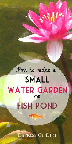Want to make a little pond? This shows you everything you need to get started. And don't worry: it's easy! #spon