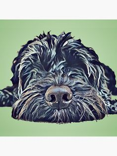 Dog Pop Art, Dog Art, Art Pop, Raza Schnauzer, Black Labradoodle, Dog Portraits, Animal Paintings, Art Drawings, Canvas Prints