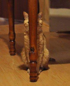 escondendo