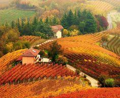 TOP OF AUTUMN, Langhe - Piemonte, Italy #Travel-ParadisDivineItaly
