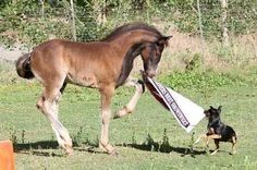 Foal and dog playing tag. That horse is so cute.