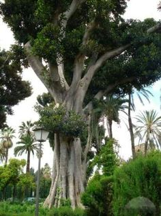 Unusual tree in tropics