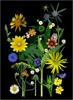 Wildflowers (Photo: Ellen Hoverkamp)