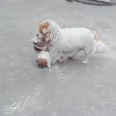 Funny Animal Videos, Funny Animal Pictures, Cute Funny Animals, Animal Memes, Cute Baby Animals, Funny Dogs, Animals And Pets, Silly Dogs, Dog Pictures
