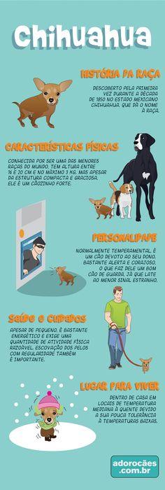 Chihuahua: história da raça, características físicas, personalidade, temperamento, saúde e cuidados, lugar para viver