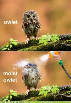 I feel so bad for the owlet ;(