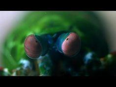 World's Deadliest - Shrimp Packs a Punch