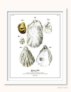 Oyster Print - Vintage Oyster Illustration Collage - Natural History Illustration - Shells - Mollusk - Sealife - Ocean - Nautical Art