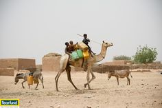 Children collecting water on camels and donkeys at Issakitchi, Dosso province. #hunger #africa #sahel Richard Hanson/Tearfund