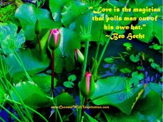 """Transformation in love is perfectly described by this inspirational quote on love- """"Love is that magician that pulls man out of his own hat. Inspirational Quotes About Love, Love Quotes, The Magicians, Plant Leaves, Hat, Plants, Qoutes Of Love, Chip Hat, Quotes Love"""