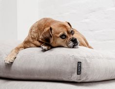 IMANII The perfect combination of design, function and comfort in dog accessories. Dogbed, Hundekissen, Hundebett ,Ribby Ruby'. www.imanii.com