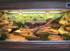 Bearded Dragon Terrarium, Bearded Dragon Cage, Bearded Dragon Habitat, Bearded Dragon Enclosure, Reptile Habitat, Monitor Lizard, Crested Gecko, Terraria, Pet Cage