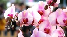 Pink Orchid by W. Li on 500px